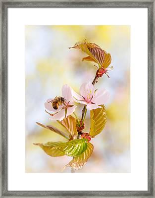 Framed Print featuring the photograph Breakfast At Sakura by Alexander Senin