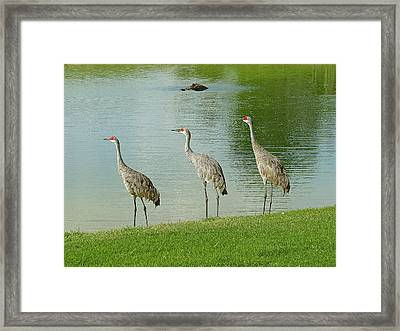 Breakfast Lunch And Dinner Framed Print by Adele Moscaritolo