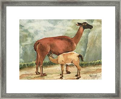 Breakfast On Machu Picchu Framed Print by Marsha Elliott