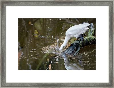 Breakfast Plunge Framed Print