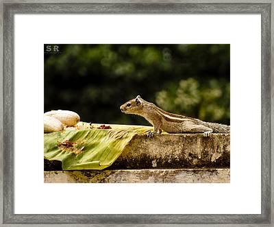 Breakfast Framed Print by Ram Prasad