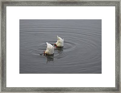 Breakfast Framed Print by Sergey and Svetlana Nassyrov