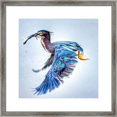 Breakfast Framed Print by Sumoflam Photography