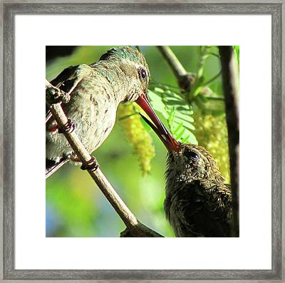 Breakfast Time Framed Print