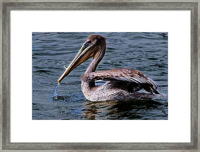 Breakfast Time Framed Print by Thanh Thuy Nguyen