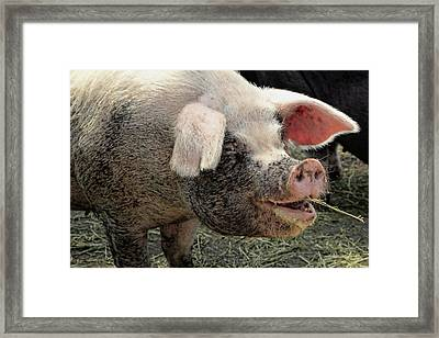 Breakfast With A Smile Framed Print by Gordon Dean II