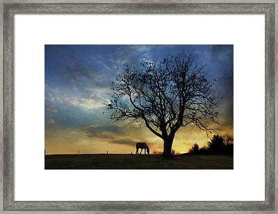 Grazing With A View Framed Print by Lori Deiter