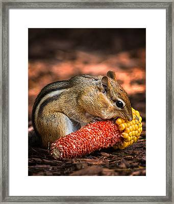 Breakfast With Chipmunk Framed Print