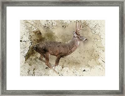 Breaking Limits Deer Art Framed Print by Jai Johnson
