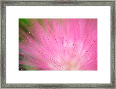 Breaking Loose Framed Print