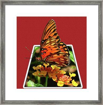 Breakout Butterfly Framed Print
