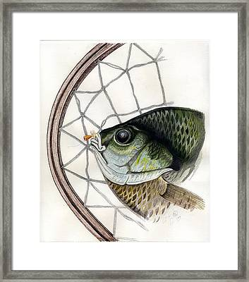 Bream And Net Framed Print by H C Denney