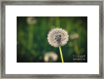 Breath Framed Print by Alessandro Giorgi Art Photography