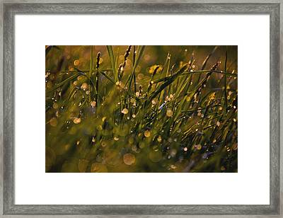Breath Of Rain Framed Print