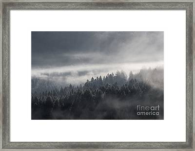 Framed Print featuring the photograph Breath Of The Forest by Yuri Santin