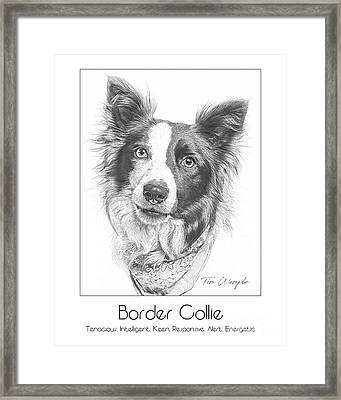 Breed Poster Border Collie Framed Print by Tim Wemple