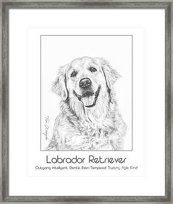 Breed Poster Labrador Retriever Framed Print by Tim Wemple