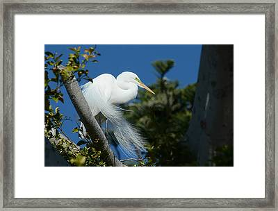 Framed Print featuring the photograph Breeding Beauty by Fraida Gutovich