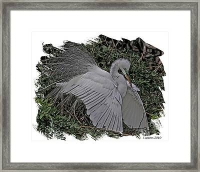 Breeding Plumage Framed Print by Larry Linton