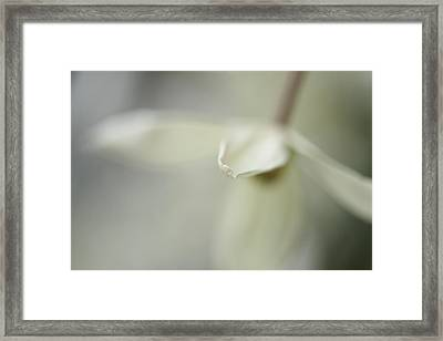 Breeze Framed Print by Connie Handscomb