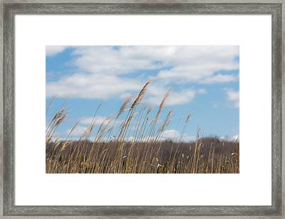 Breeze Framed Print by Sara Hudock