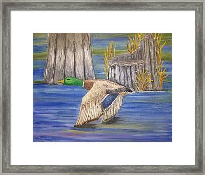 Breezing Across The Wetlands Framed Print by Belinda Lawson