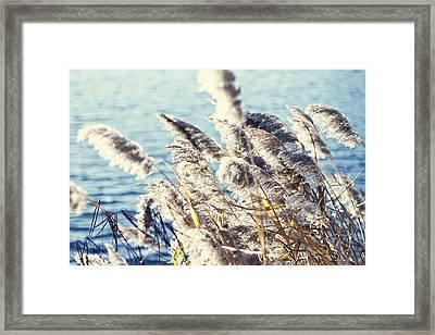 Breezy Days Framed Print by Ariane Moshayedi