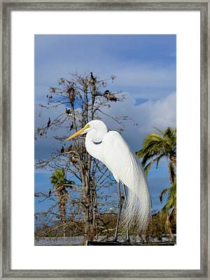 Breezy Egret Framed Print
