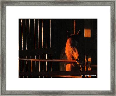 Breezy Framed Print