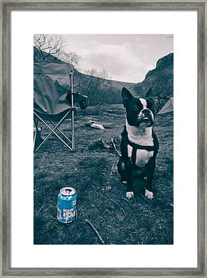Brewdog Bull Framed Print by Justin Albrecht