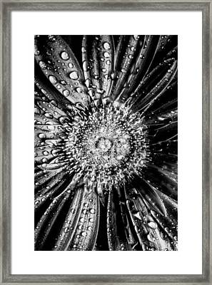 Brewer Bw Framed Print by Matti Ollikainen