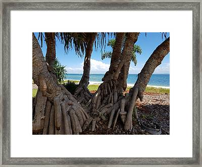 Bribie Trees  Framed Print