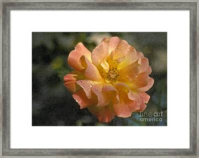 Framed Print featuring the photograph Bridal Pink Yellow Hybrid Tea Rose Genus Rosa by David Zanzinger