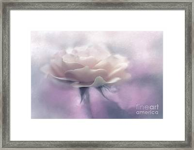 Bridesmaid Rose Framed Print by Jean OKeeffe Macro Abundance Art