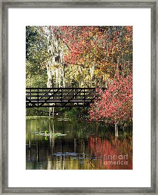 Bridge At Sawgrass Lake Park Framed Print