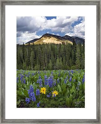 Bridger Teton National Forest Framed Print