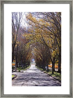 Bridlewood Framed Print