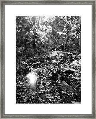 Brief Respite Framed Print by Eric Radclyffe