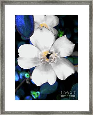 Bright Blue Accents White Vinca Framed Print