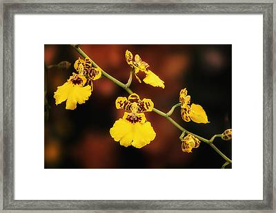 Bright And Beautiful Orchids Framed Print by Tom Mc Nemar