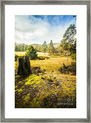 Bright And Colourful Forest Framed Print