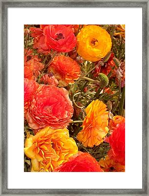 Bright And Sunny Framed Print by Jean Booth