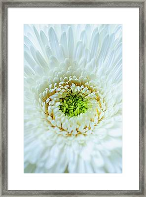 Bright As A Lime Framed Print