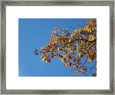 Bright Autumn Branch Framed Print