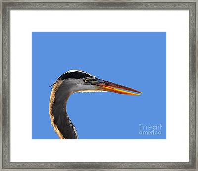 Bright Beak Blue .png Framed Print