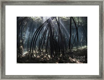 Bright Beams Of Sunlight Filter Among Framed Print by Ethan Daniels