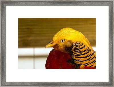 Bright Bird Framed Print