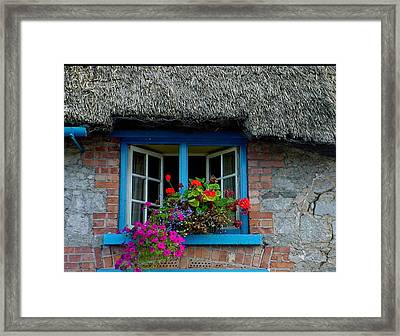 Bright Blooms Framed Print by PJ  Cloud