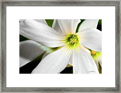 Bright Center Framed Print by Christopher Holmes