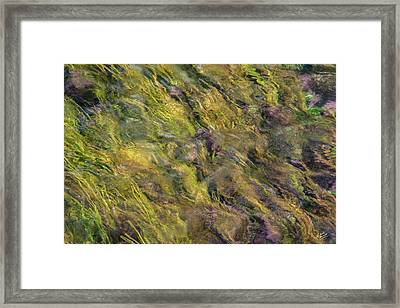 Bright Cheerful Waters Framed Print by Leland D Howard
